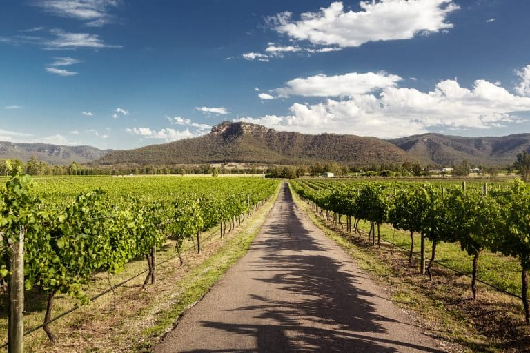 Hunter Valley Vineyard Tours